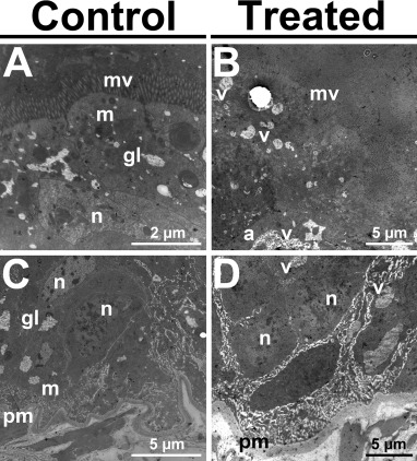 Permethrin induces histological and cytological changes in