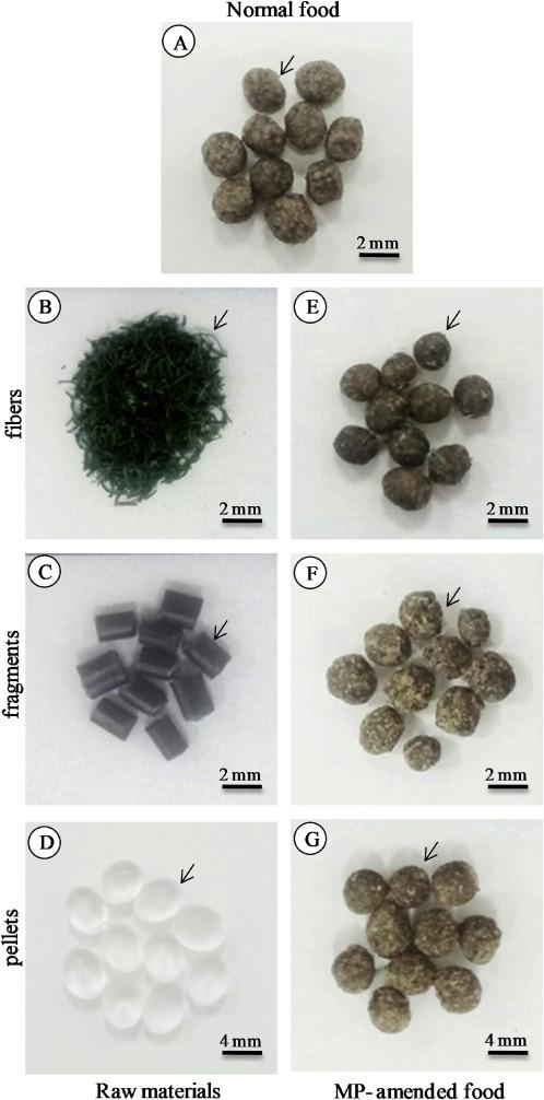 Effects of virgin microplastics on goldfish (Carassius