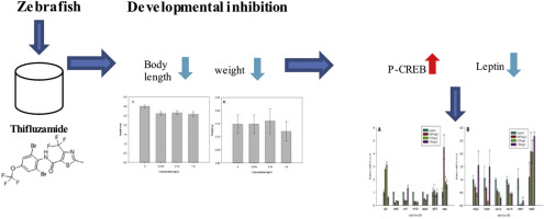 Developmental toxicity by thifluzamide in zebrafish (Danio rerio ... 8102a2185f9