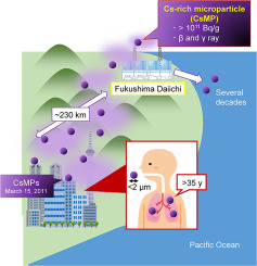 Dissolution of radioactive, cesium-rich microparticles released from the Fukushima Daiichi Nuclear Power Plant in simulated lung fluid, pure-water, and seawater