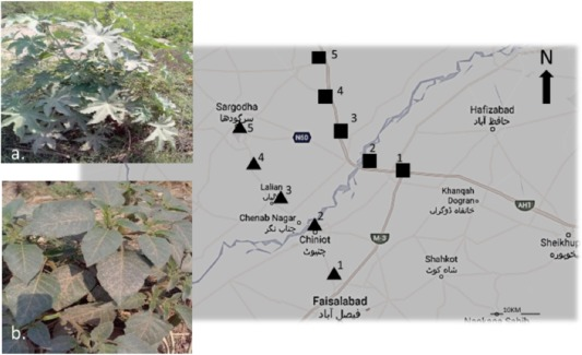 Study of the responses of two biomonitor plant species (Datura alba