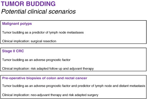 Tumor Budding In Colorectal Cancer Ready For Diagnostic Practice Sciencedirect