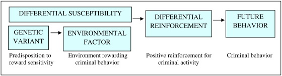 biological theory of criminal behaviour