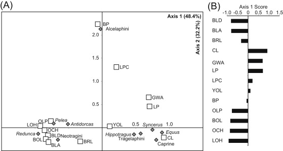 Taphonomic and paleoecological change in the large mammal
