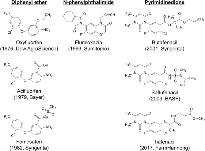 Biochemical and physiological mode of action of tiafenacil, a new