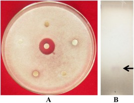 Volatile organic compounds of Bacillus atrophaeus HAB-5 inhibit the