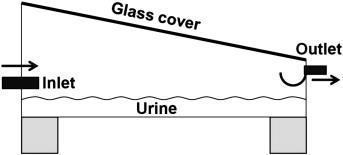 Solar thermal evaporation of human urine for nitrogen and phosphorus