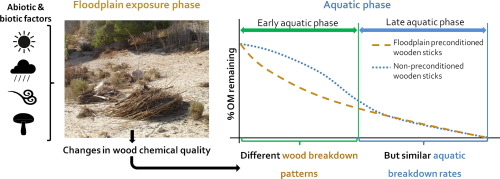 Exposure of wood in floodplains affects its chemical quality and its