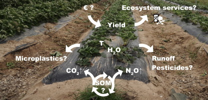Plastic Mulching In Agriculture Trading Short Term Agronomic