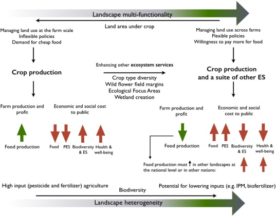 Food Production Ecosystem Services And Biodiversity We Can