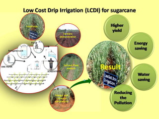 Low cost drip irrigation: Impact on sugarcane yield, water