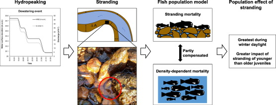 dd3d1f76b06 Modelling the effects of stranding on the Atlantic salmon population ...