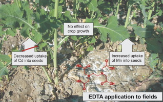EDTA application on agricultural soils affects microelement