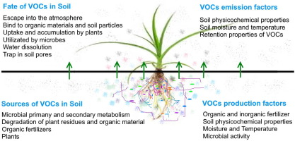 Profiling of soil volatile organic compounds after long-term