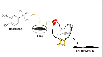 Transfer of arsenic from poultry feed to poultry litter: A
