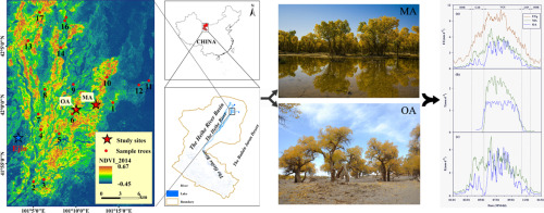 Responses of riparian forests to flood irrigation in the