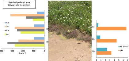 Residual pollution and vegetation distribution in amended soils 20
