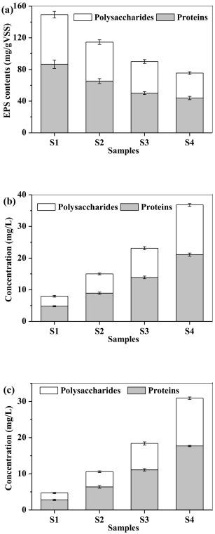 Effect of metabolic uncoupler, 2,4‑dinitrophenol (DNP) on