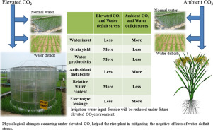 Effects of water deficit stress on agronomic and