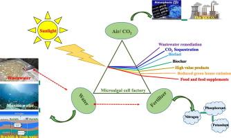 Zero-waste algal biorefinery for bioenergy and biochar: A