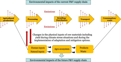 Environmental sustainability of fruit and vegetable production