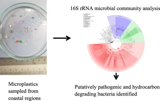 Profiles of bacterial assemblages from microplastics of