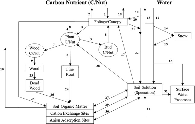 Projections of water, carbon, and nitrogen dynamics under future
