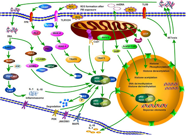 Air pollution associated epigenetic modifications