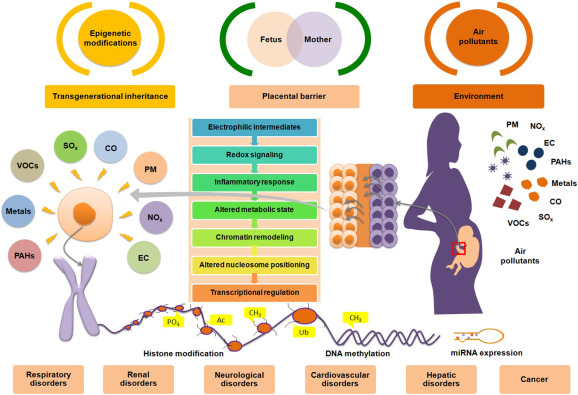Air pollution associated epigenetic modifications: Transgenerational