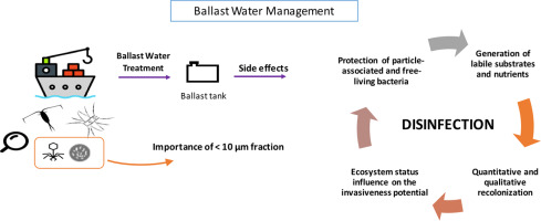 Microorganisms In Ballast Water Disinfection Community Dynamics