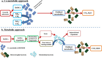 Roles of ammonia-oxidizing bacteria in improving metabolism