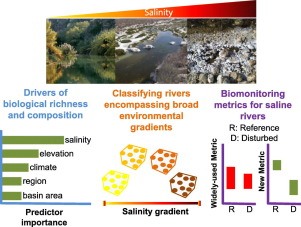 Evaluating anthropogenic impacts on naturally stressed ecosystems: Revisiting river classifications and biomonitoring metrics along salinity gradients