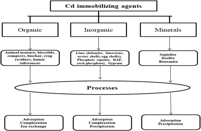 An explanation of soil amendments to reduce cadmium