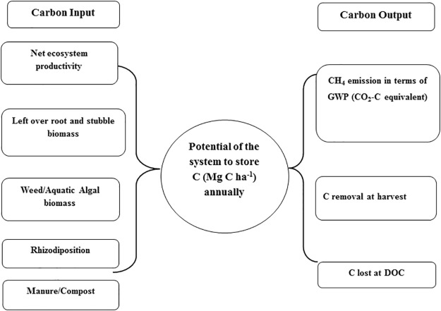 Current and emerging methodologies for estimating carbon