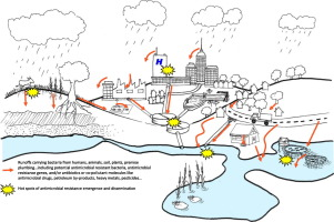 Antibiotic resistance in urban runoff - ScienceDirect