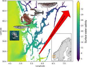 Spatial distribution of mercury in seawater, sediment, and