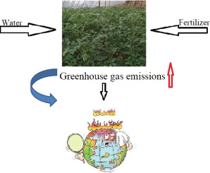 Yield and gas exchange of greenhouse tomato at different