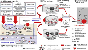 Antibiotic resistance in drinking water systems: Occurrence, removal