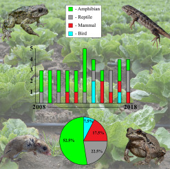 There's a frog in my salad! A review of online media coverage for