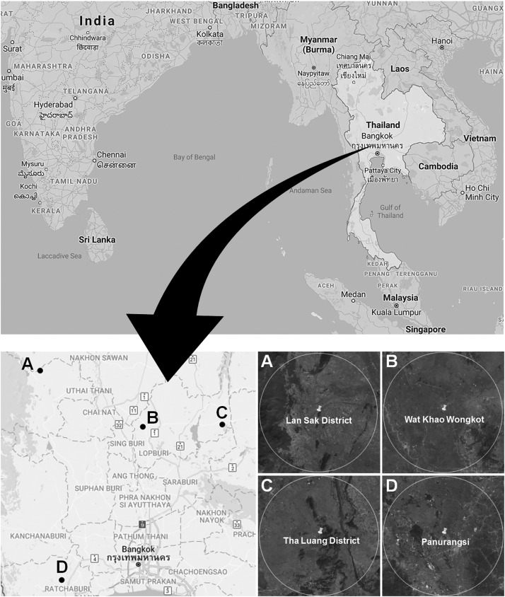 Impacts of land use on an insectivorous tropical bat: The