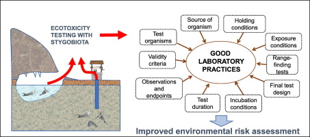 Recommendations for ecotoxicity testing with stygobiotic