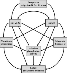Abiotic and biotic controls on dynamics of labile phosphorus