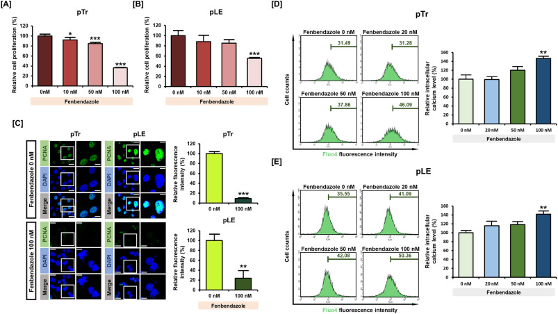 Fenbendazole induces apoptosis of porcine uterine luminal epithelial