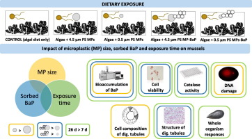 Impacts of dietary exposure to different sized polystyrene