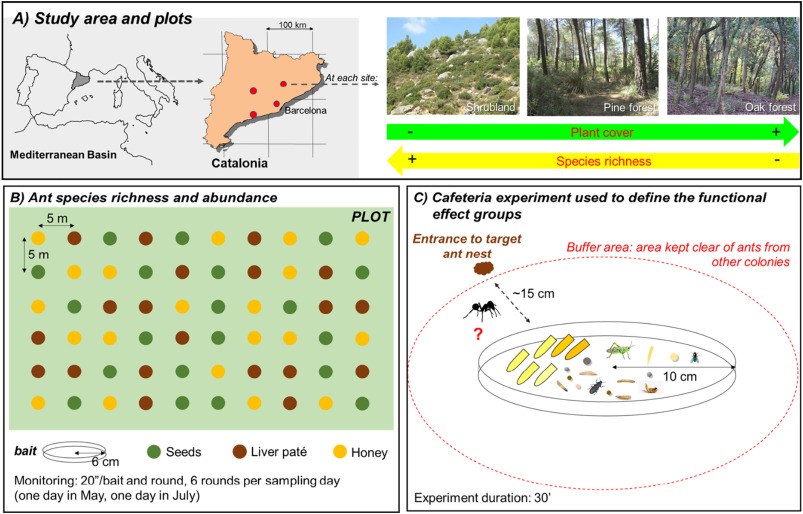 Food resource exploitation and functional resilience in ant