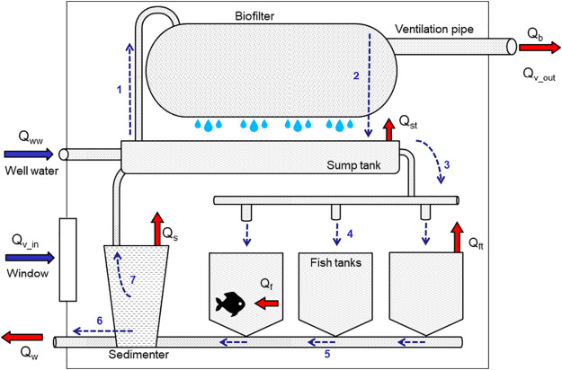 Improving water management in European catfish recirculating