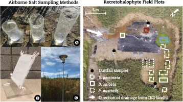 Haloconduction as a remediation strategy: Capture and