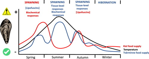 Influence of season-depending ecological variables on biomarker