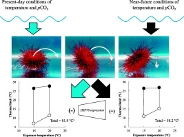 Ocean warming and acidification pose synergistic limits to