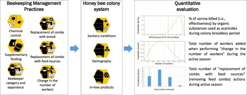 Beekeeping and honey bee colony health: A review and
